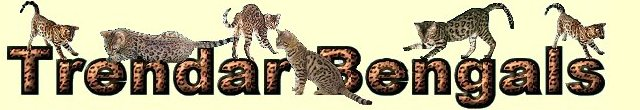 Charleston WV Bengal kittens available for sale