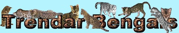 Playful Trendar Bengal Kittens for sale in West Virginia USA,