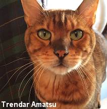 15 year old pet Bengal cats