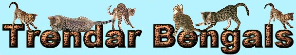 Trendar Bengal cats and Kittens