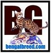 Bengal Breed Websites Bengal cat 