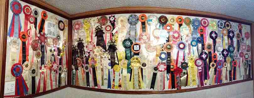TICA and ACFA shows ribbons won by Trendar