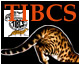 The International Bengal Cat Society Bengal cat 