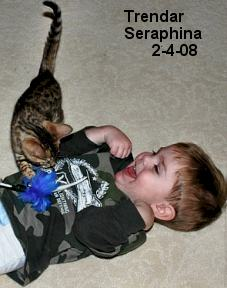 bengal kittens and kids