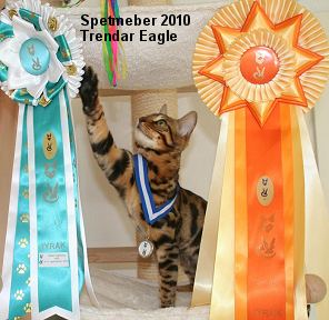 Cat show in Denmark