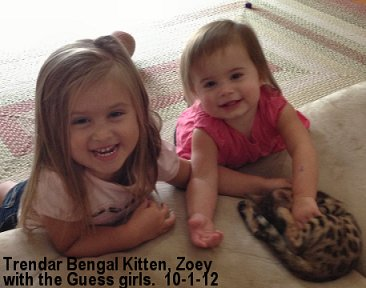 Children and Bengal Cats