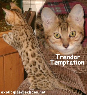 Bengals from Trendar in their new homes