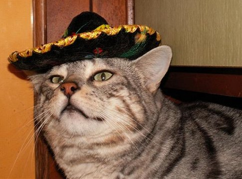 Mexican Cat 66097 | SITWEB