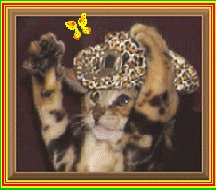 Trendar Kitten in Safari Hat